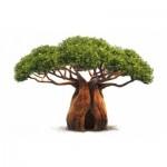 Lisser les rides avec le baobab