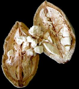 Extrait de Baobab