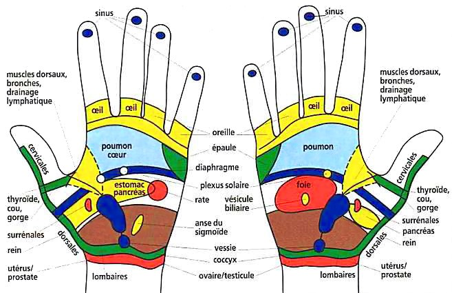 soin mains shéma